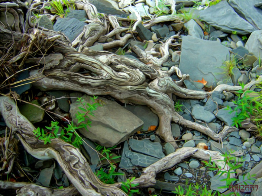 Gnarled Roots.jpg.opt911x683o0,0s911x683