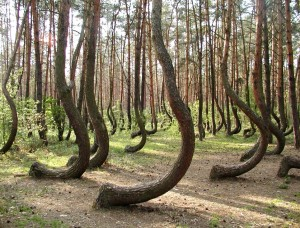 "All humans instantly recognize that these trees are weirdly far from the 'form"" of tree, and we are driven to want to know why."