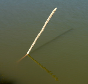 StickInWater