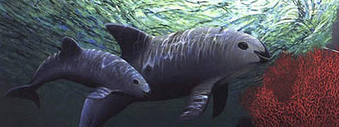 Check out this Vaquita. Even if you have never seen one before, you know what category it goes in.